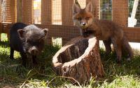 """Weiterlesen: Wie """"Hund & Katz"""" - ? Nicht so im Naturpark Buchenberg!"""