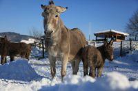 Weiterlesen: Tierspuren im Schnee (1. Februar 2015)