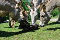 Weiterlesen: Baby-Boom im Tierpark Buchenberg