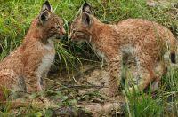 Weiterlesen: Erleben Sie Wildtiere in ihrer natürlichen Umgebung