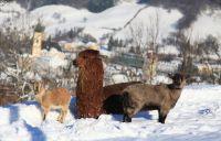 Weiterlesen: Wildtiere im Winter / Jagasteig (1. März 2015)